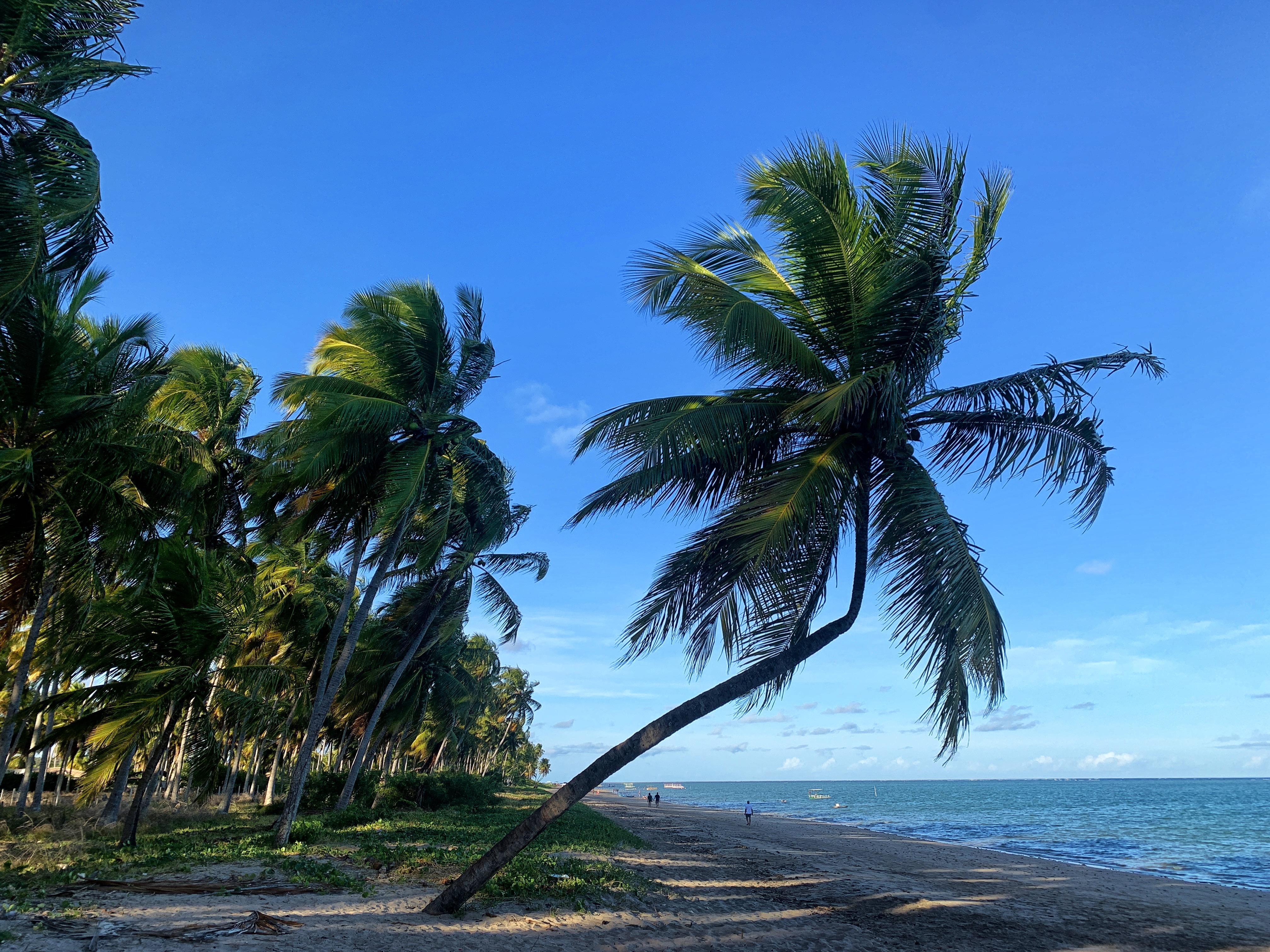 A nossa viagem pela Rota dos Corais entre Alagoas e Pernambuco